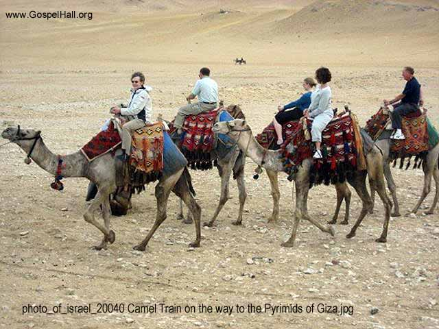 photo_of_israel_20040 Camel Train on the way to the Pyrimids of Giza.jpg