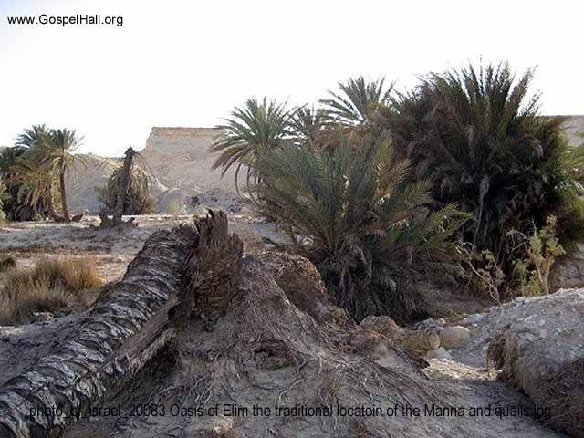 photo_of_israel_20083 Oasis of Elim the traditional locatoin of the Manna and quails.jpg