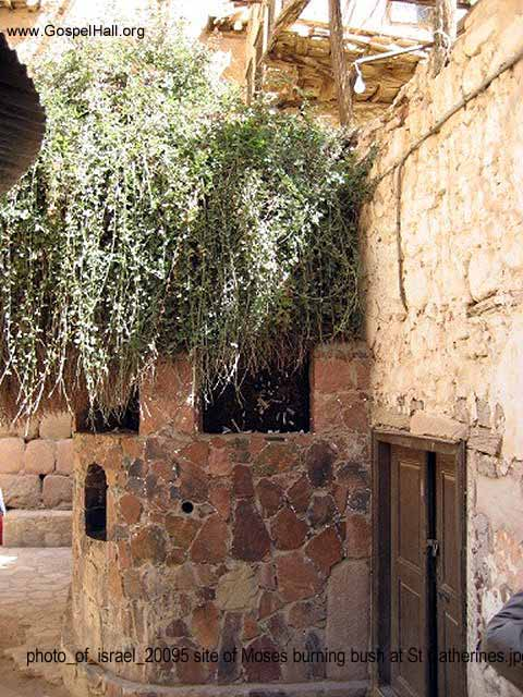 photo_of_israel_20095 site of Moses burning bush at St Catherines.jpg