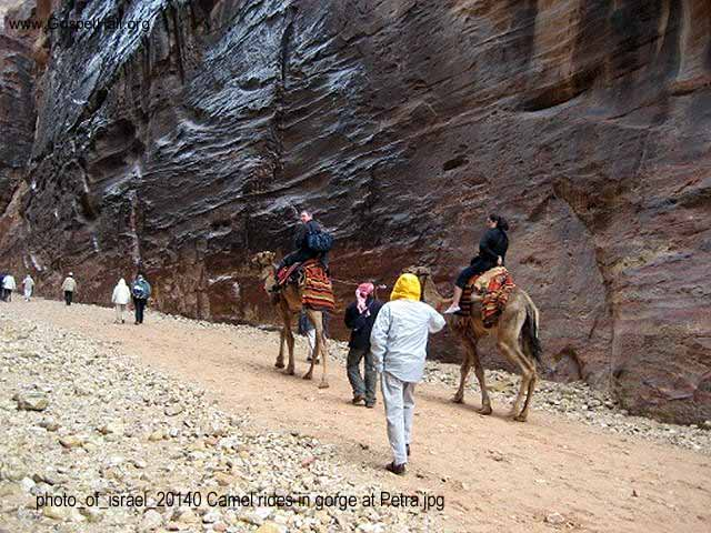 photo_of_israel_20140 Camel rides in gorge at Petra.jpg